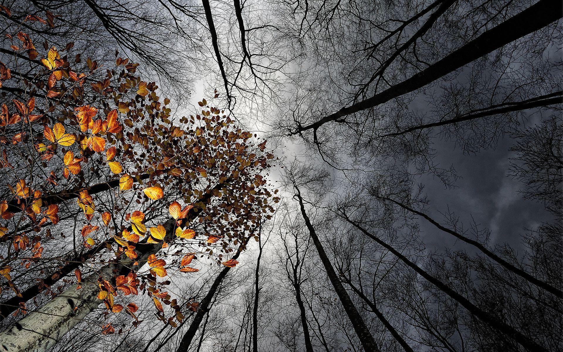 В Челябинской области температура опустится до зимних минус 2 градусов