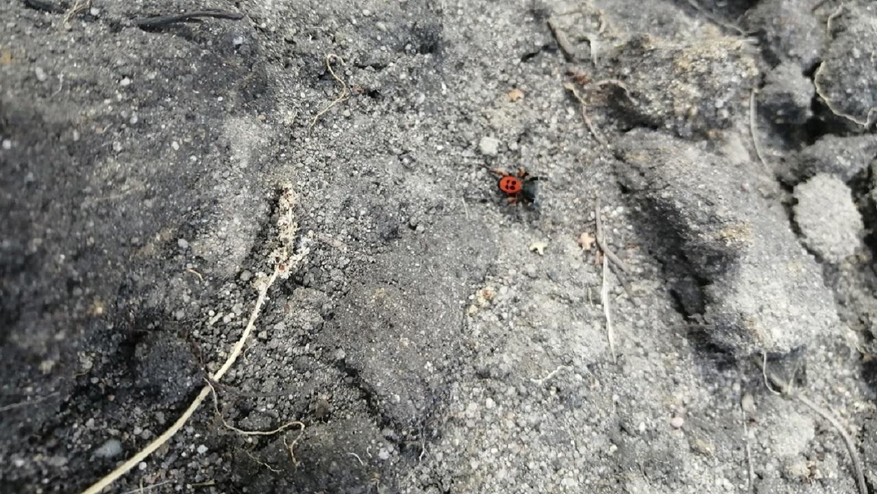 Редкого и ядовитого паука нашли в Челябинской области