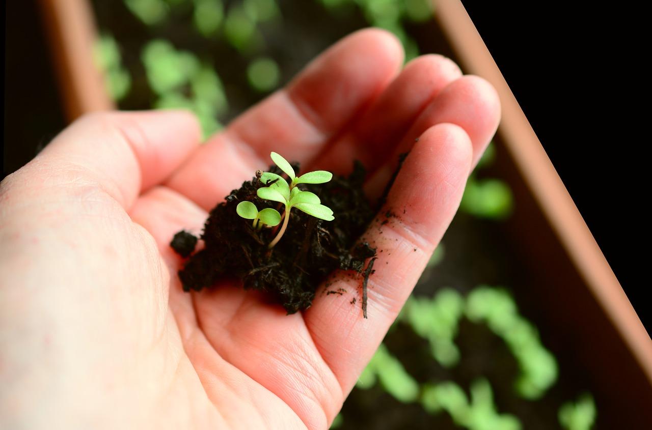 Как подготовить огород к заморозкам: 5 советов садоводам