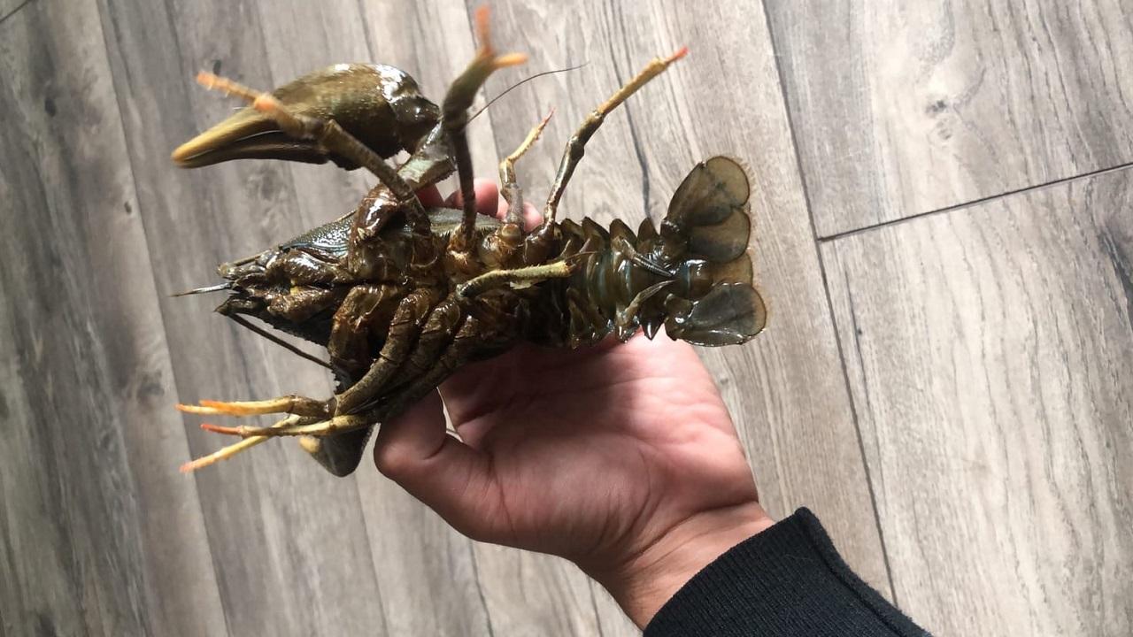 Раков-гигантов поймали рыбаки в Челябинской области
