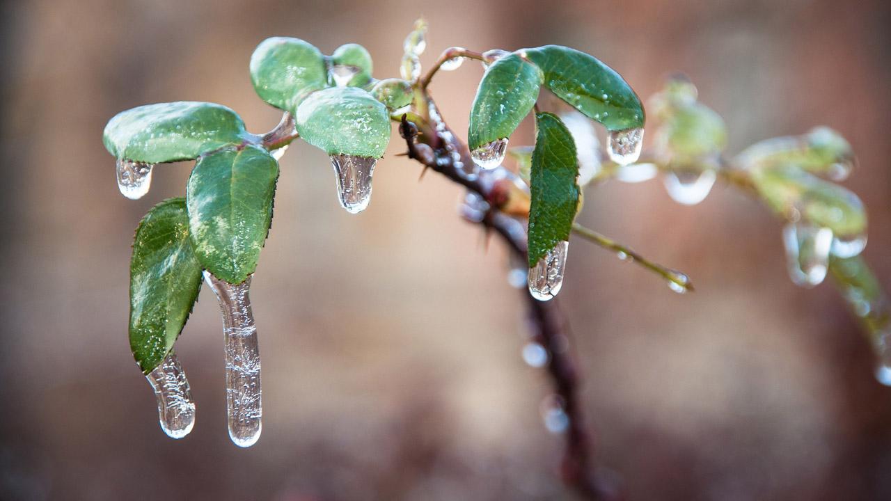Ледяной дождь обещают в Челябинской области: штормовое предупреждение
