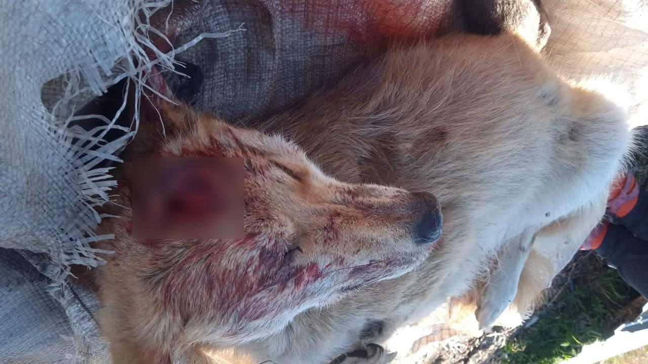 Изуродованную собаку с проломленной головой нашли в Челябинской области
