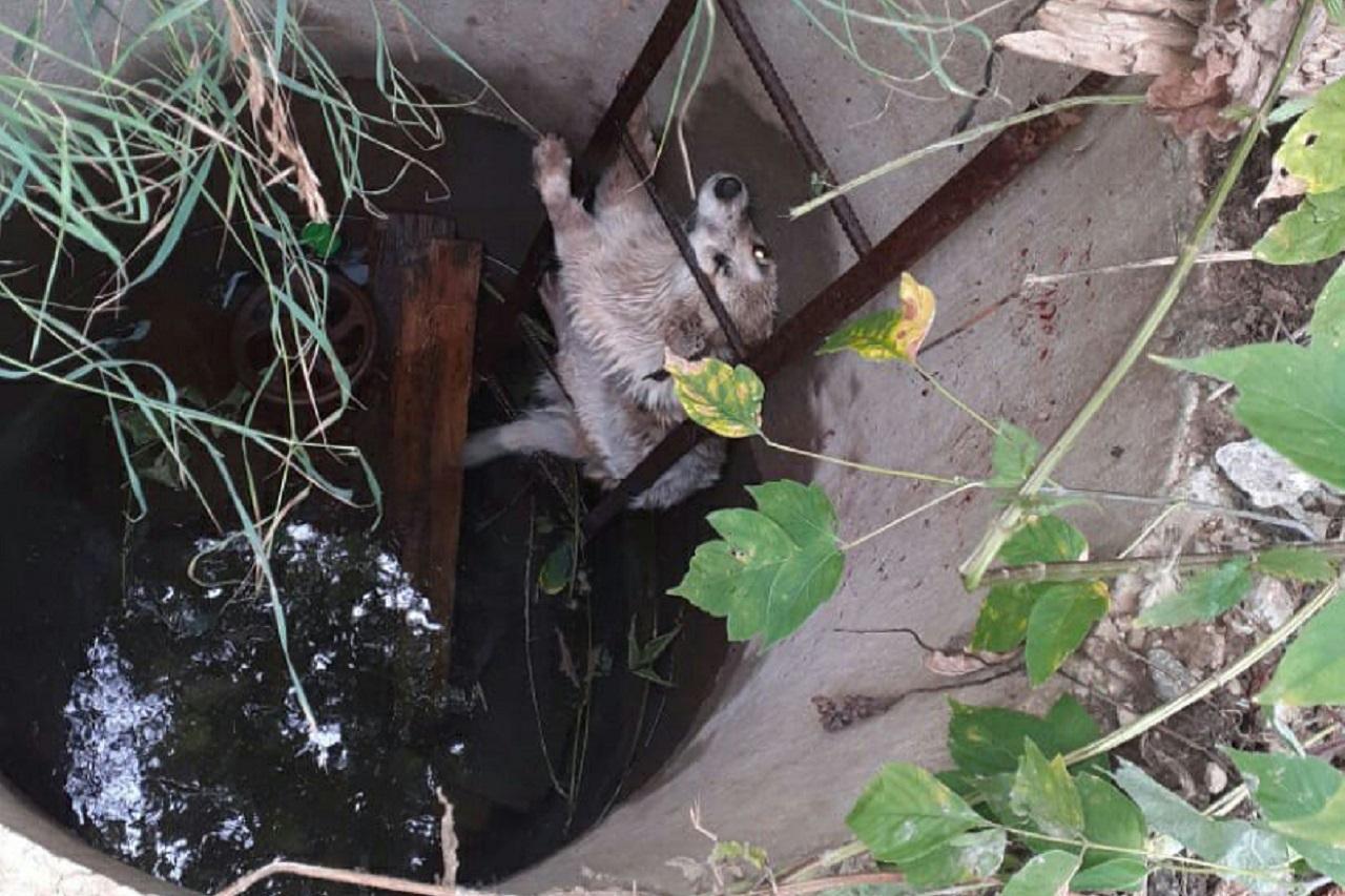 Упавшего в колодец пса спасли в Челябинской области