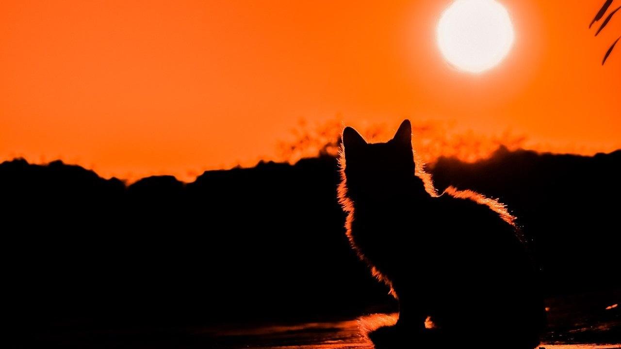 Приметы на ночь: что можно и нельзя делать после заката