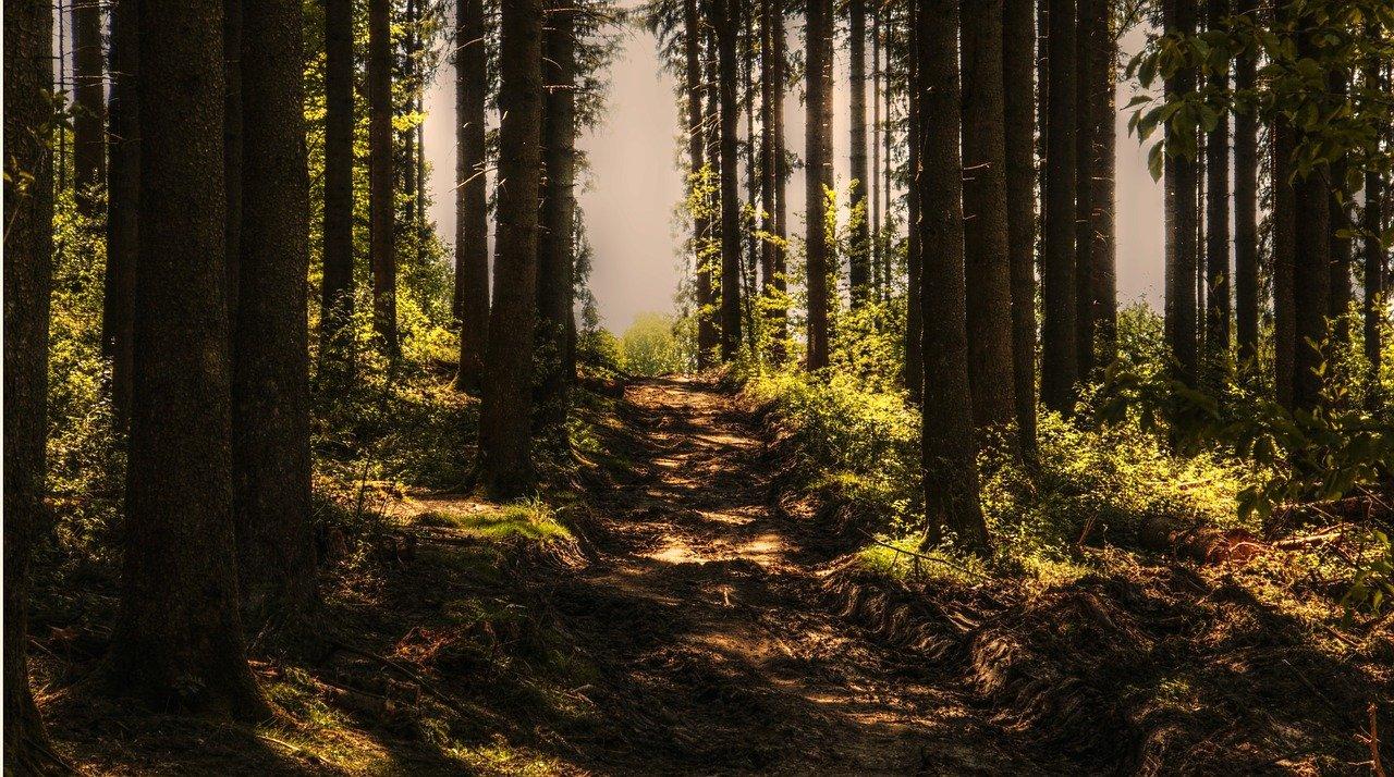 Двое пенсионеров заблудилась в лесу Челябинской области
