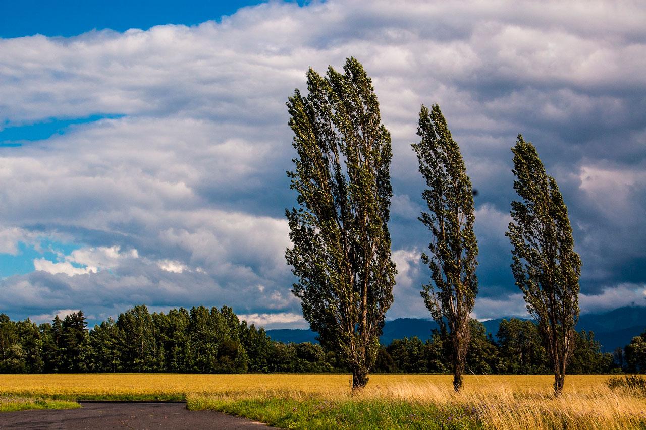 Из-за ветра в Челябинской области объявлен желтый уровень опасности