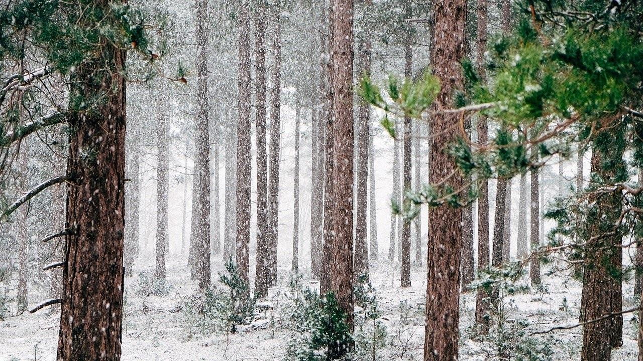 Синоптики рассказали, когда в Челябинской области пойдет снег