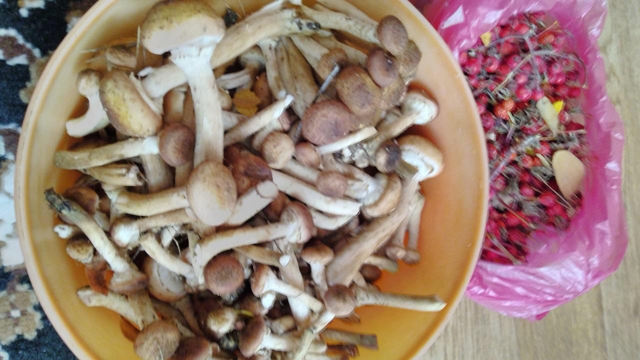 Жители Челябинской области хвастаются небывалым урожаем грибов