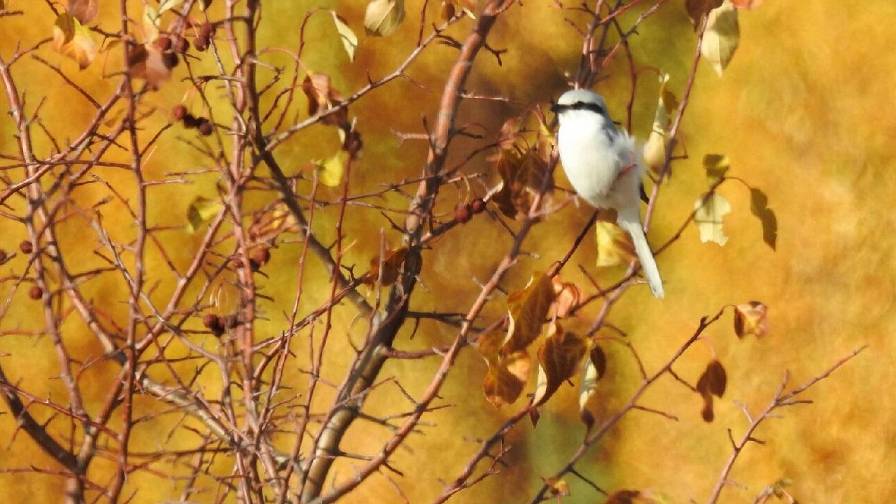 Милую и жестокую птицу заметили в Челябинской области