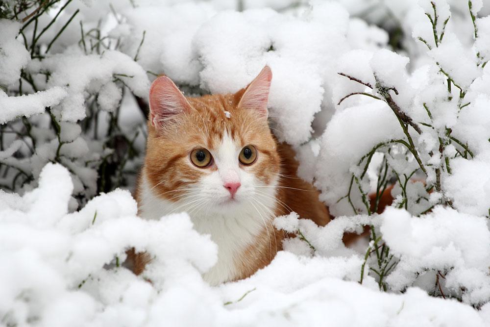 Синоптики рассказали, когда в Челябинскую область заглянет зима