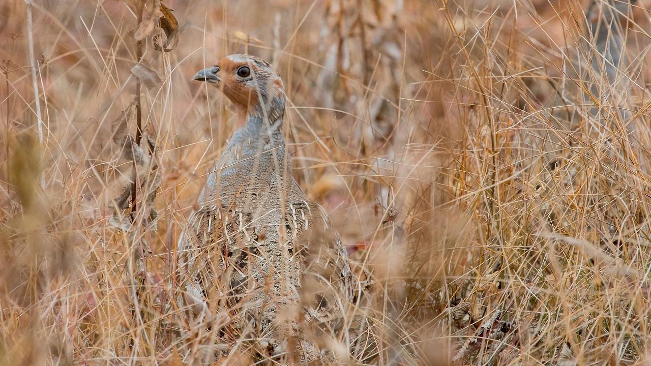 Скрытную древнюю птицу удалось сфотографировать в Челябинской области