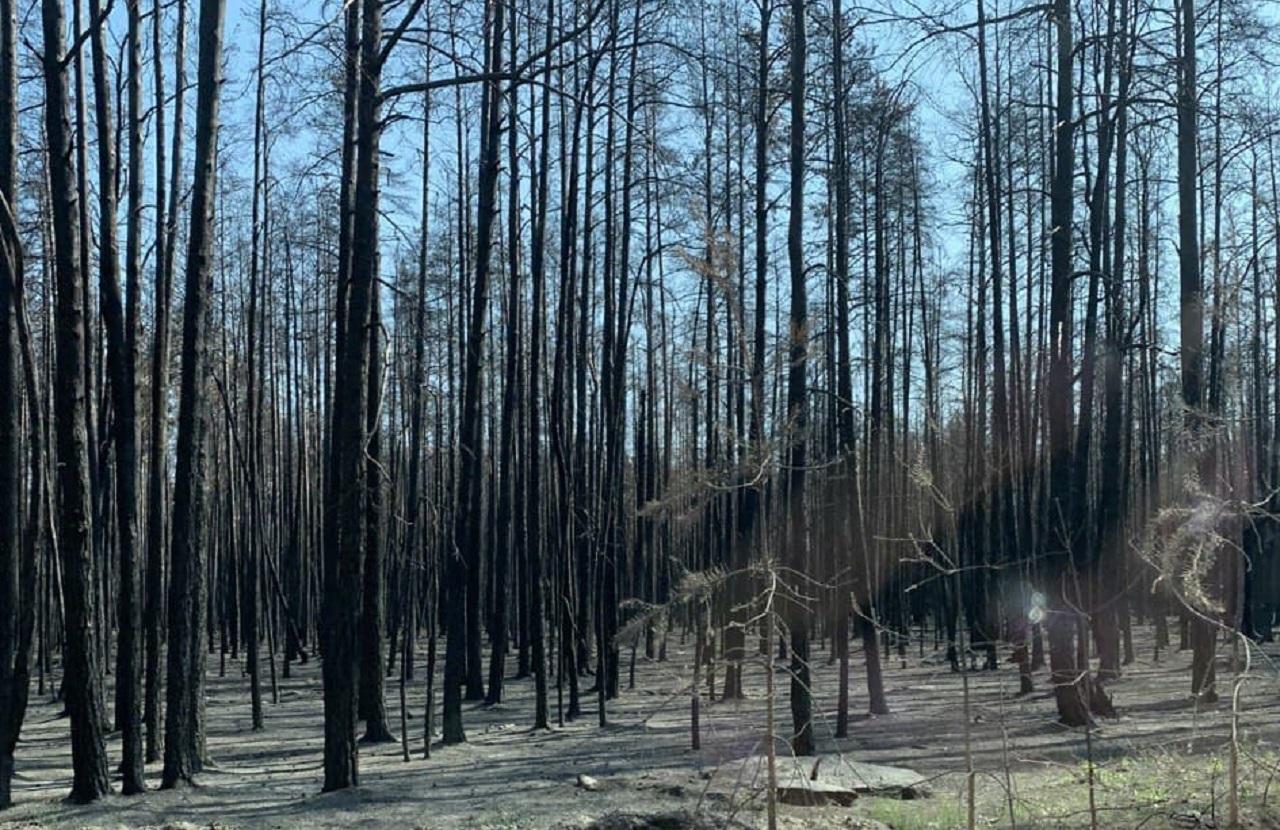 Сохраним лес: Челябинская область стала участником всероссийской акции