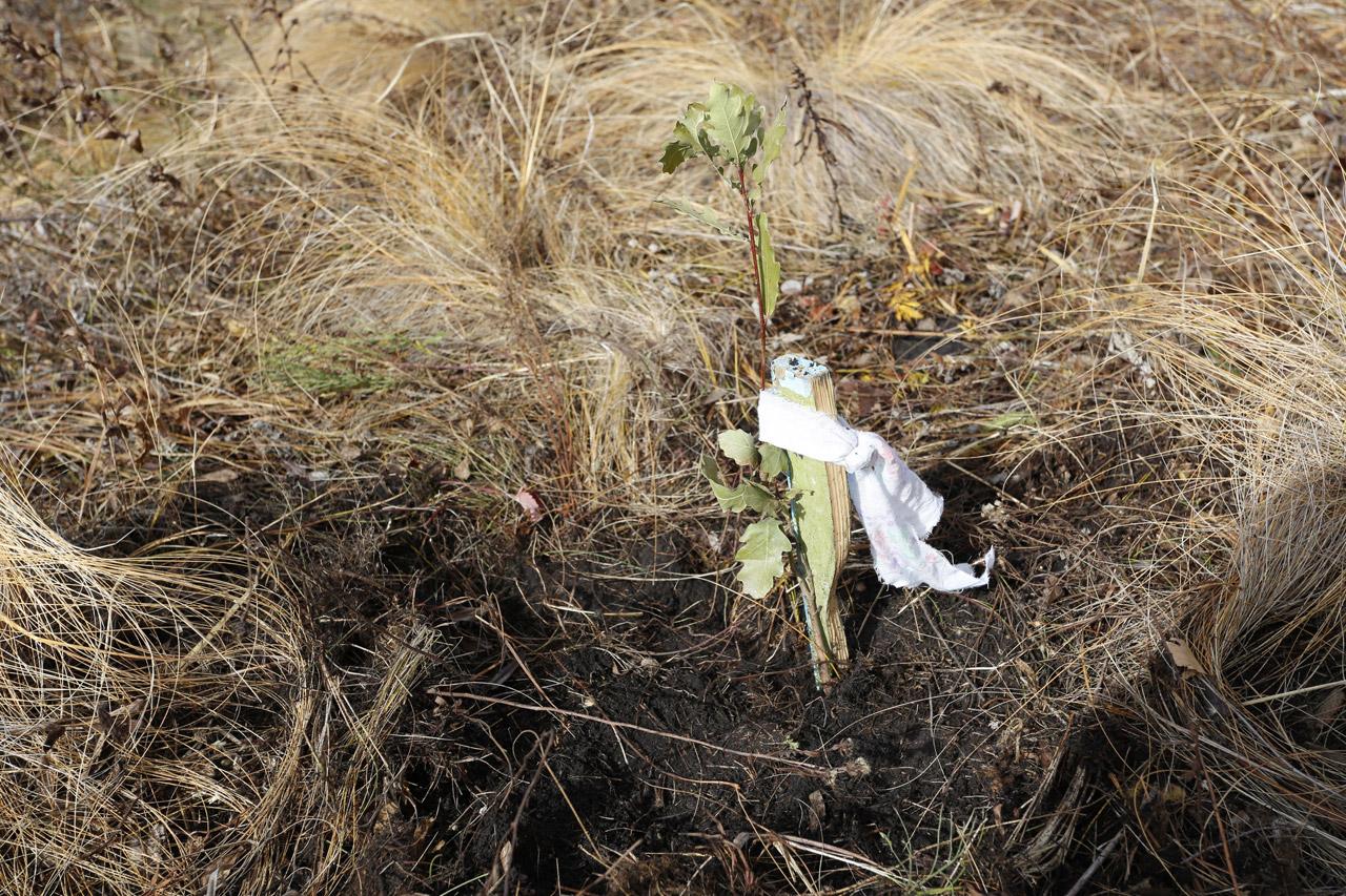 В Челябинской области восстанавливают леса после природных пожаров