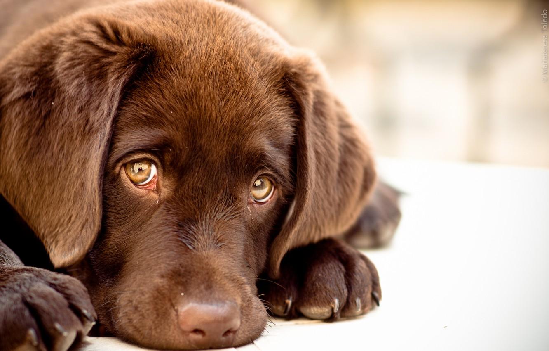 Сотня собак отравилась неизвестным веществом в приюте Челябинской области